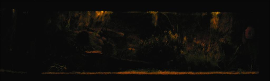 Aquarium avec éclairage de nuit